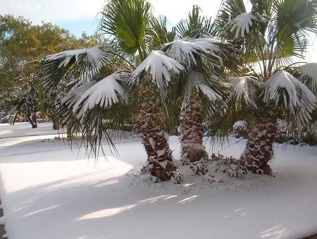 palmsnow